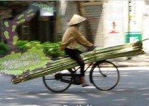 Bamboo-sostenibile-e-innovativo
