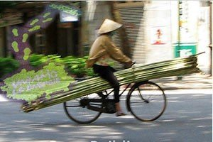 Bamboo-sostenibile-e-innovativo