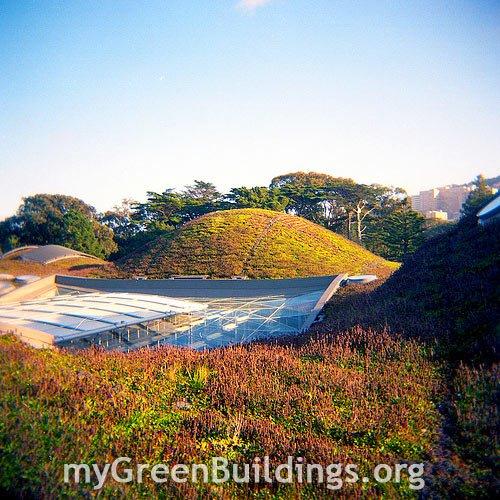 Tetti Verdi per il Risparmio Energetico e la Sostenibilità Urbana