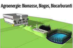 Impianti-biogas-biomasse-biocarburanti-incentivi-e-modelli-di-sviluppo-agroenergie